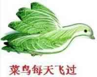 菜鸟飞离银豆上空!