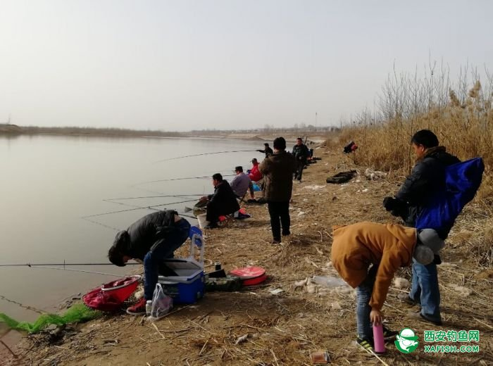 2017年12月31日,渭河边上觅钓点。