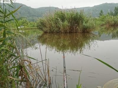 2020钓鱼记事(下)--钓池塘
